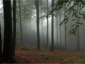 Hesse und der Herbst